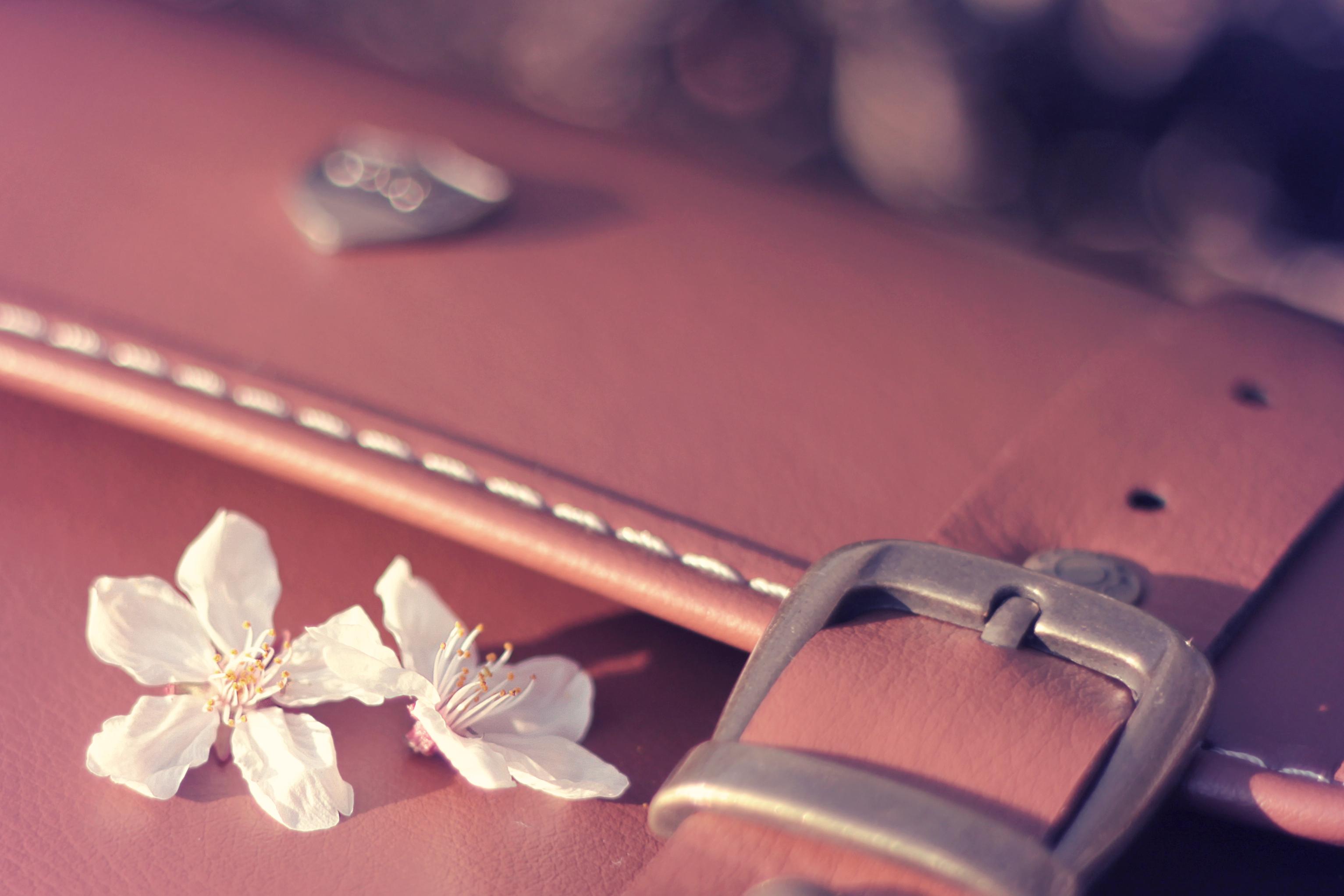 かばんの上に桜の花びらが落ちている写真