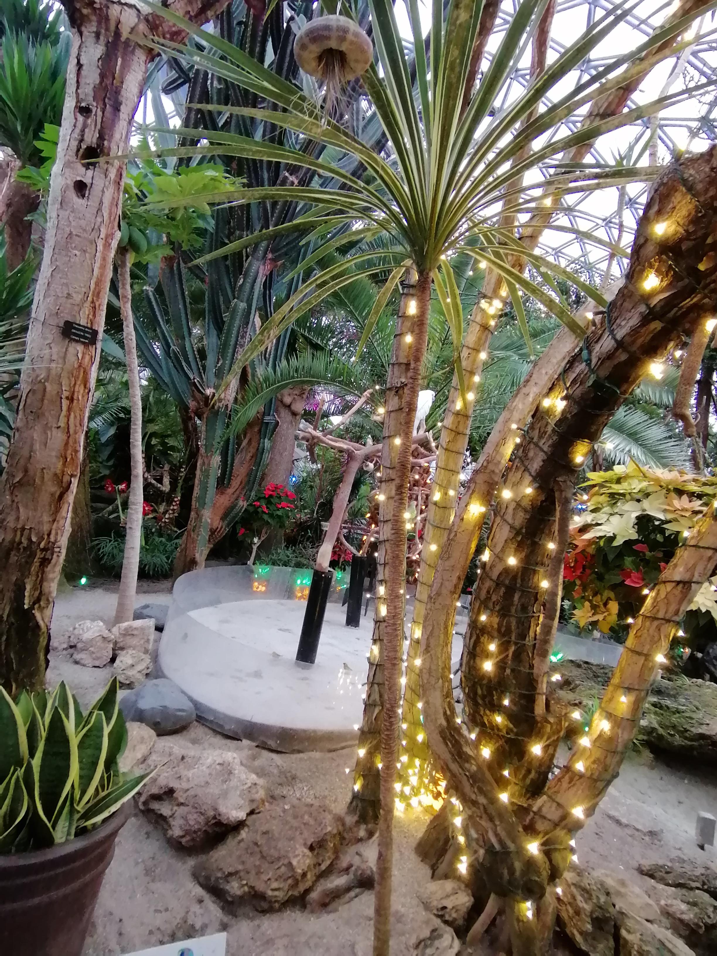 エリザベスパークの頂上にある「鳥のドーム型楽園」、正式名所「ブレーデル・コンサーバトリー」の中のライトアップされた写真