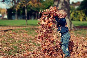 2歳ぐらいの男の子が沢山ある落ち葉で遊んでいる写真