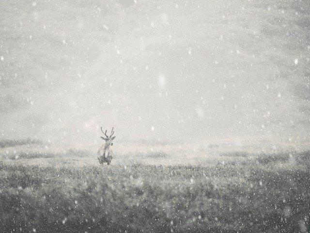 薄暗い吹雪の中、シカが一人立っている写真