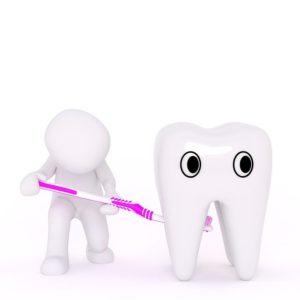 歯1本の模型とそれを歯ブラシで磨く人形の絵