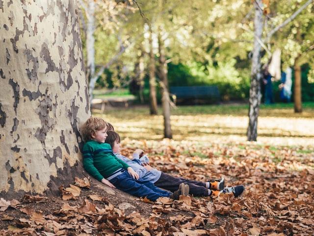 小学生ぐらいの子供達が落ち葉の上で大樹にもたれかかってお話している写真