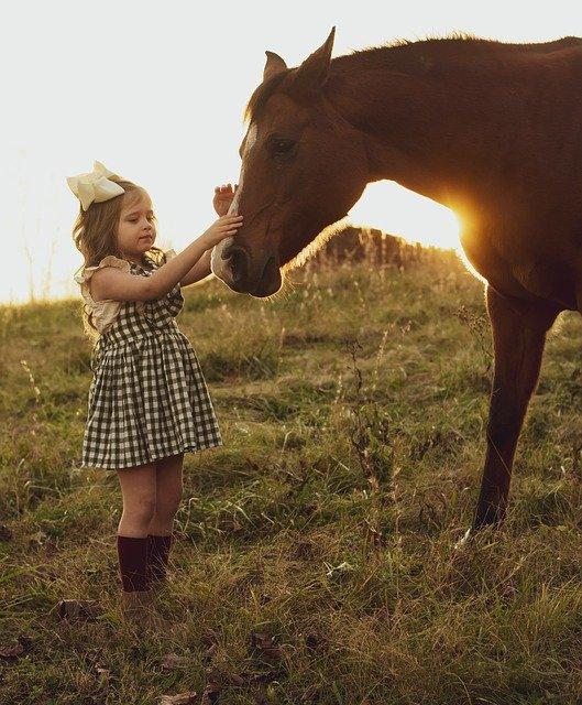 牧場で女の子が馬の顔を触っている写真