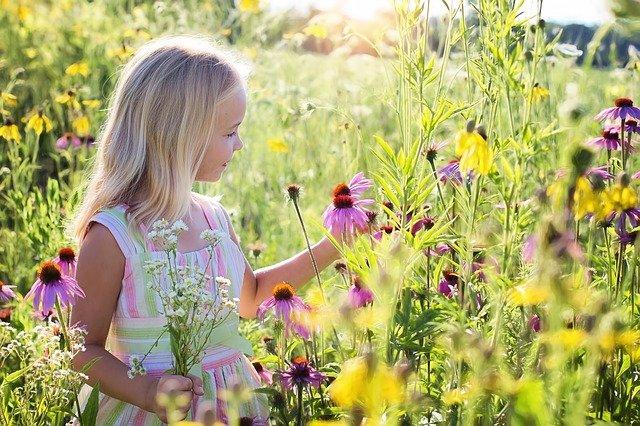 ワンピースを着た女の子が花畑で花を摘んでいる